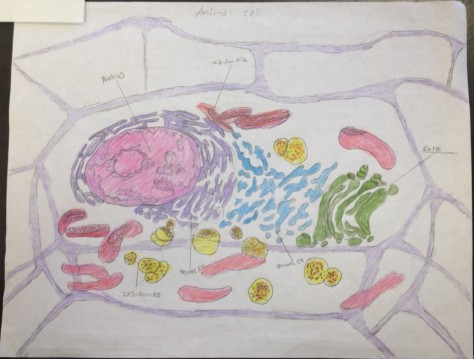 Animal Cell with Organelles