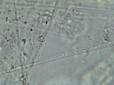DNA-2016-02-12-11-16-29