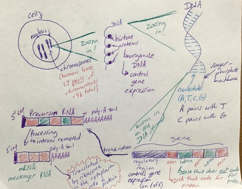 Biology 200203 Picture